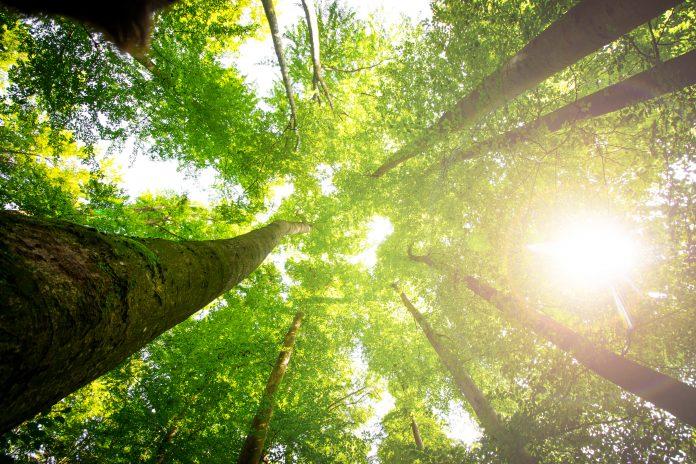 Forêt arbres vue du sol vers le ciel