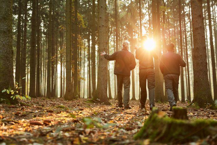 3 personnes marchant en forêt